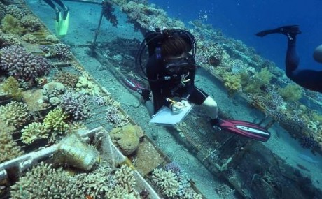 Jessica Bellworthy monitoring coral health on the reef.