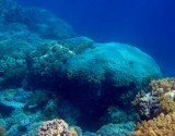 Red Sea Coral (IMAGE)